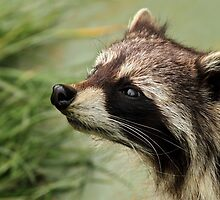 The Shiny Nosed Bandit by Mark Hughes