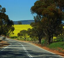 A Canola Crop in Western Australia by myraj
