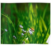 Springtime! Poster