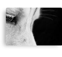 The Husky Staring... Canvas Print