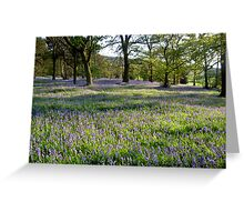 Bluebell Woods, Ilkley, Yorkshire Greeting Card