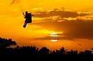 Sunset Paragliding 2 by Alex Preiss