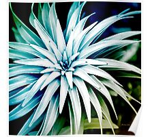 Blue Spiral Plant Abstract Poster