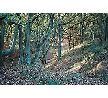 Trees, Mousehold Heath, Norwich, England Photographic Print