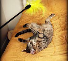 Playful Baby Tasha by jodi payne