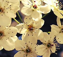 Topaz Blossoms by Shannon Ferguson