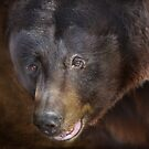Up Close and Personal by Barbara Manis