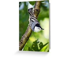 Charming Nuthatch Greeting Card