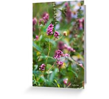 Pink Smartweed Flowers Greeting Card