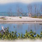 Ft. Myers Beach Lagoon by Rosalie Scanlon