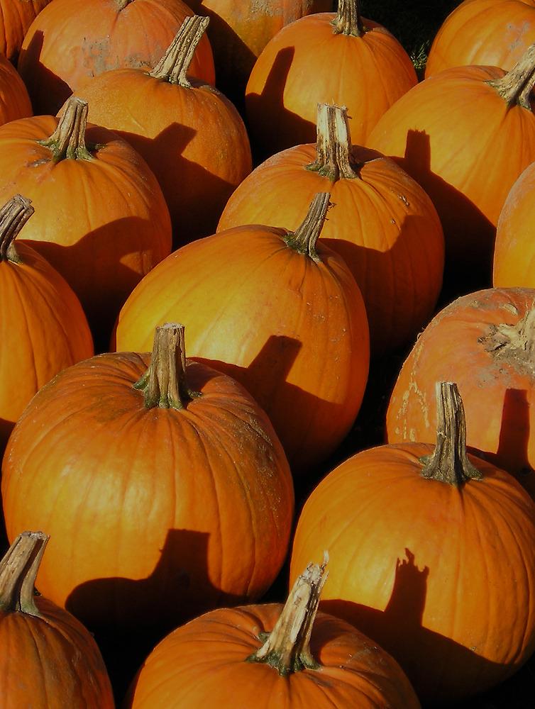 Pumpkins by peterrobinsonjr
