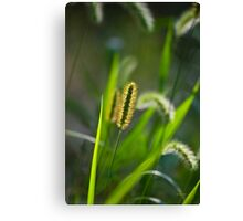 Sunlit Grass Abstract Canvas Print