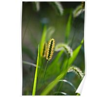 Sunlit Grass Abstract Poster