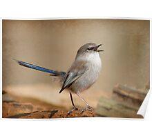 Blue Wren Strut Poster
