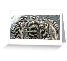 Ring -Tailed Lemur Greeting Card