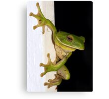 frog 6 Canvas Print