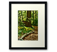 Spring Beauty and Tree Framed Print