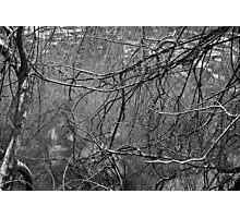 Limbs 2 Photographic Print