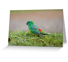 Red-rumped parrot  Greeting Card