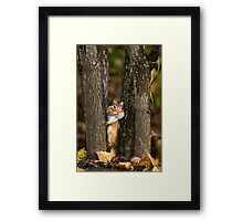 Peek a boo Chipmunk Framed Print