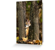 Peek a boo Chipmunk Greeting Card