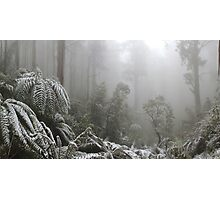 A Forest of Ash and snow  Photographic Print