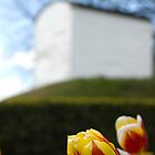 Boscobel House Flower by CheesyGoat