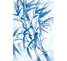 Tropical blue bamboo Photographic Print