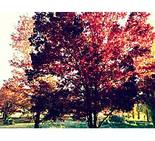 All the Colours of Autumn Photographic Print