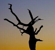 African Sunset by mattbuckley