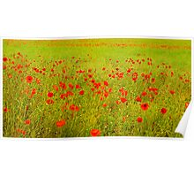 Just Poppies? Poster
