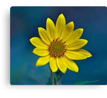 Sundrops Canvas Print
