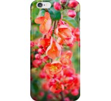 Quince blossom iPhone Case/Skin