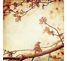 Morning Song Photographic Print