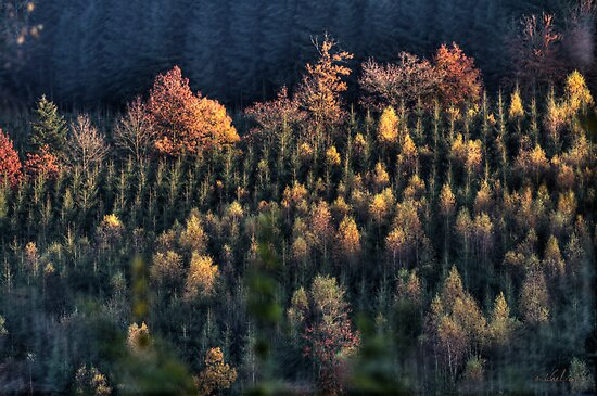 Autumn trees by Michel Raj