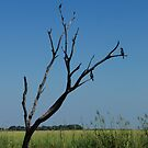 chobe waters by mellychan