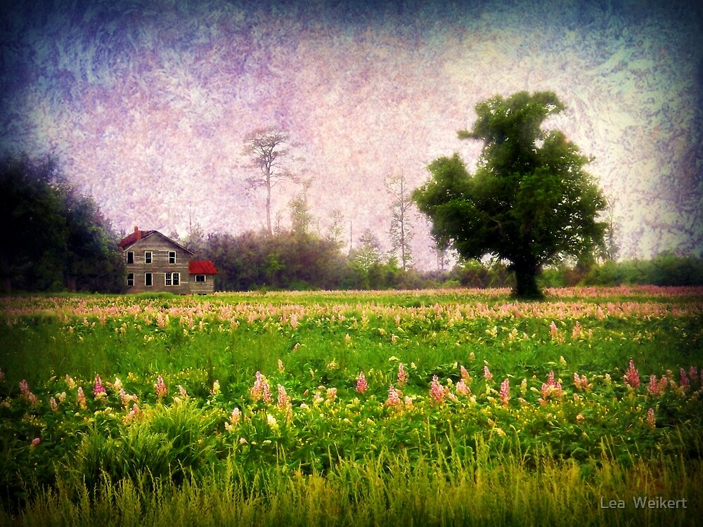 Where the Clary Sage Grows by Lea  Weikert