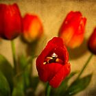 Red Tulips by ArtPhotoAstrid