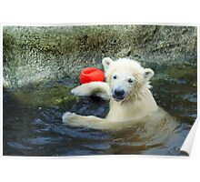 Playing the Ball - Baby Polar Bear Poster