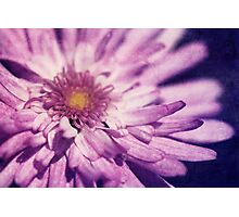The Poetry Of Pink Petals Photographic Print