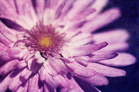 The Poetry Of Pink Petals by Tangerine-Tane