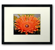 Favourite Flower Framed Print