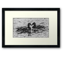 Mallard Crossing Framed Print