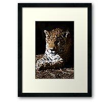 Jaguar in Half-light Framed Print