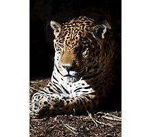 Jaguar in Half-light Photographic Print