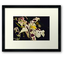 Exotic Orchids Framed Print