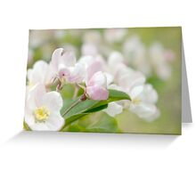 Soft freshness of apple blossom Greeting Card