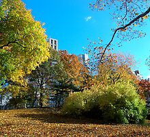A View of Central Park, New York in November by Magdalena Warmuz-Dent