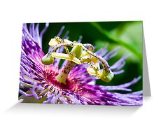 Passion Flower up Real Close Greeting Card