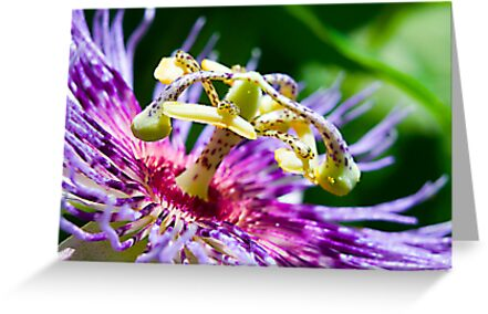 Passion Flower up Real Close by imagetj